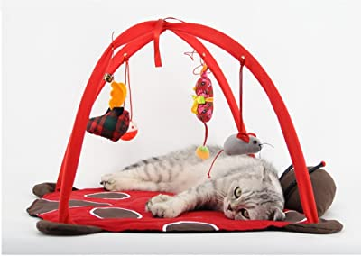cat tent with hanging toys