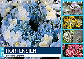 Hortensien Bluhen Und Vergehen Tischkalender 2019 Din A5 Quer