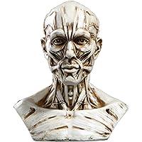 Gazechimp 4 Muscular Cabeza del Cráneo Modelo De