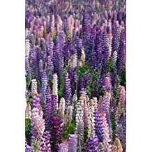 Field of Lilacs Journal: 150 page lined 6 x 9 notebook/diary/journal