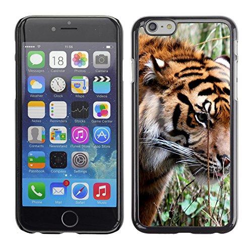 """Premio Sottile Slim Cassa Custodia Case Cover Shell // V00003816 tigre de Sibérie // Apple iPhone 6 6S 6G PLUS 5.5"""""""