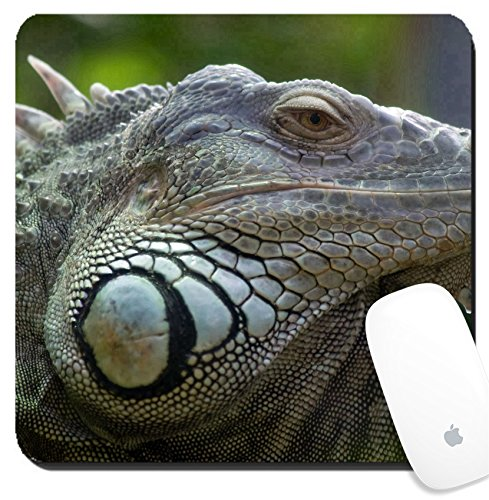 Luxlady Suqare Mousepad 8x8 Inch Mouse Pads/Mat design IMAGE ID 5090750 Iguana in Zurich Zoo - Zurich Images
