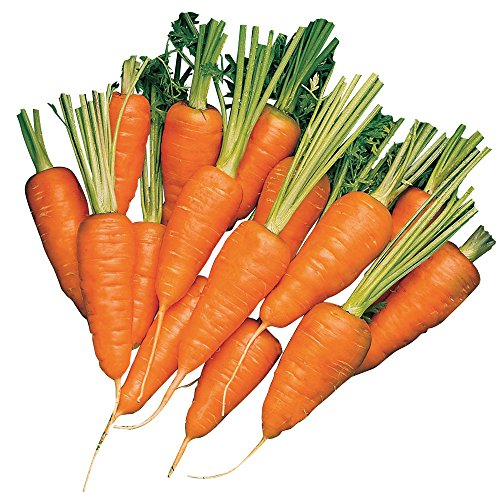 (Burpee Short 'n Sweet Carrot Seeds 3000 seeds)