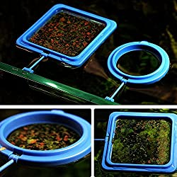 Glumes Fish Feeding Ring Aquarium Fish Safe Floating Food Feeder Circle Square and Round with Suction Cup (B)