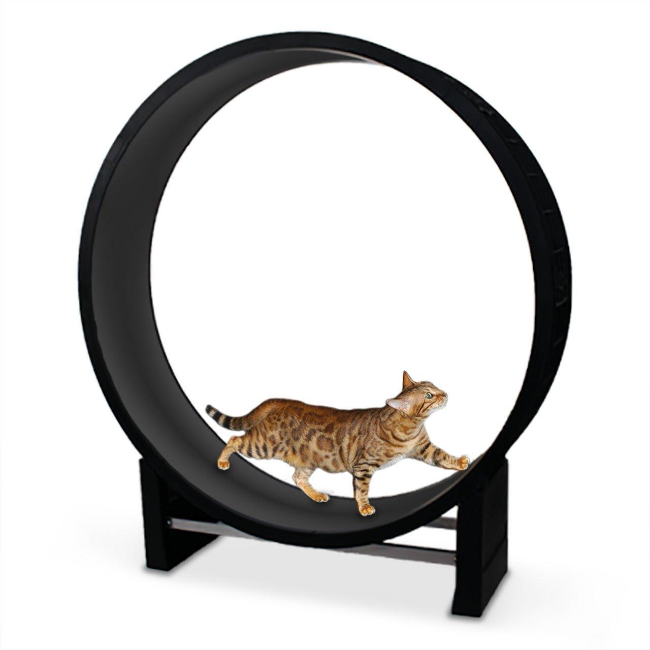 CanadianCat Company ® | Katzenlaufrad | Cat in Motion | Anthrazit - Trainingsgerät und Spielzeug für Katzen