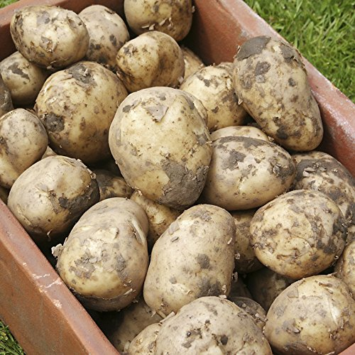 Complete Patio Potato Growing Kit Including Seed Potatoes Pots And  Fertiliser: Amazon.co.uk: Garden U0026 Outdoors