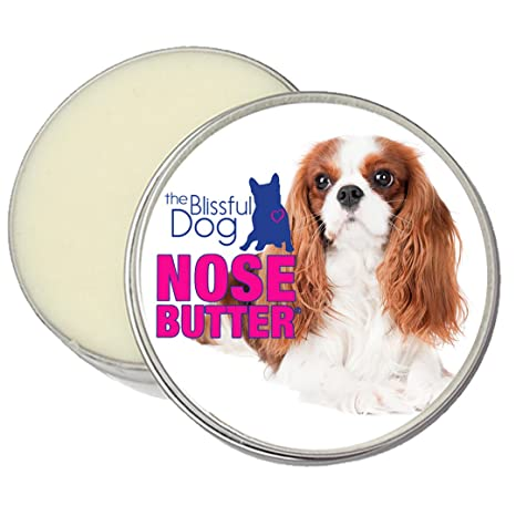 Image of: Puppies The Blissful Dog Blenheim Cavalier King Charles Spaniel Nose Butter 8ounce Psychology Today Amazoncom The Blissful Dog Blenheim Cavalier King Charles Spaniel