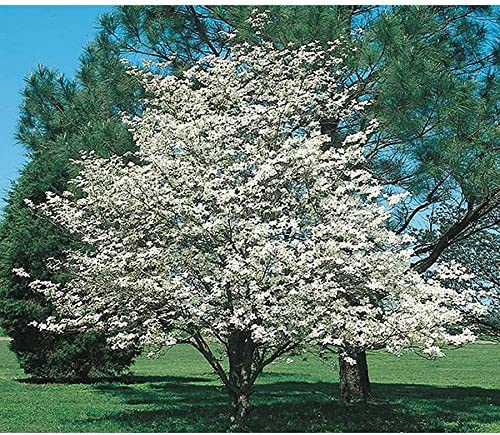 Amazon Com Grow Your Own Fruit Trees And Berries White