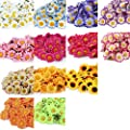 100x Artificial Gerbera Daisy Flowers Heads for DIY Wedding Party (Dark Pink)