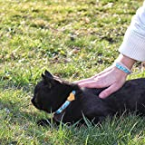 Pettsie Cat Collar Breakaway Safety with Heart and