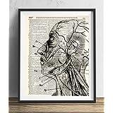 Human Anatomy Illustration (#2) Dictionary Art Print 8x10