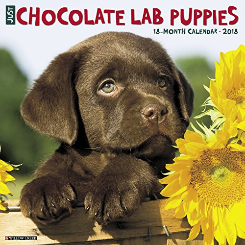 Just Chocolate Lab Puppies 2018 Calendar (Chocolate Labs)