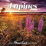 2017 Maine Lupine Down East Wall Calendar