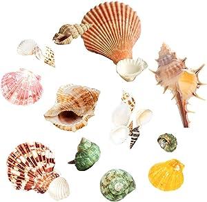 URBEST Hermit Crab Shells, 60 PCS Aquarium Fish Tank Decor Turbo Seashell Natural Sea Conch Scallops for Children DIY