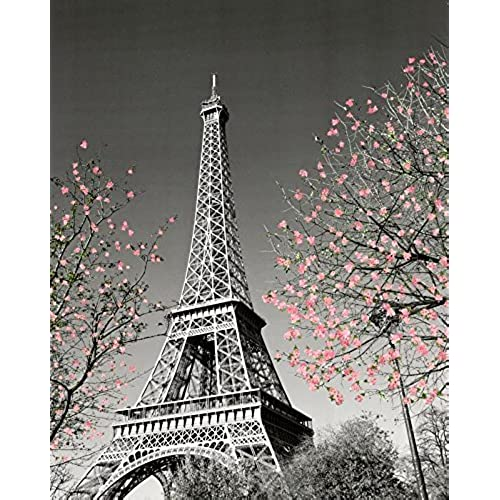 Beau Paris Eiffel Tower Blossoms Decorative Photography Travel City Poster  Print, Unframed 16x20