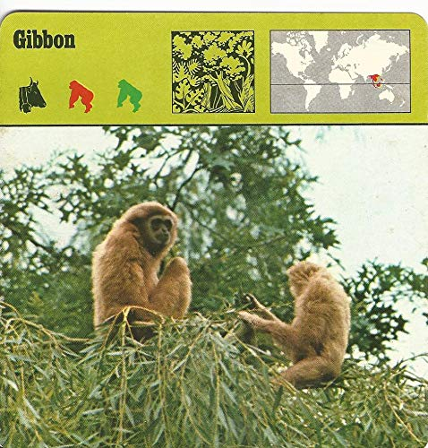 - 1975 Editions Rencontre, Animals Card, 13.296 Gibbon
