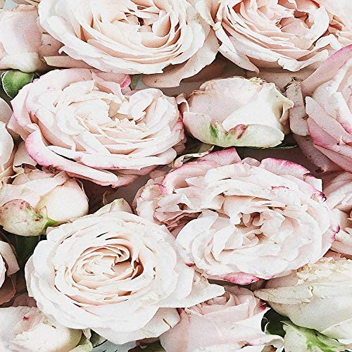 llv dekoratives Ölgemälde mit Blumen, Rose, Grünpflanze, Rosa, B, 35x50cm