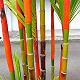 Move on 100Pcs Colorful Black Purple Green Moso-Bamboo Seeds Garden Plants (Colorful)