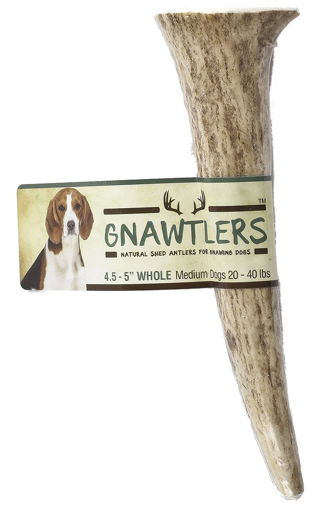 Gnawtlers - Premium Elk Antlers For Dogs, Naturally Shed Elk Antlers, USA Natural Elk Antler Chews, Specially Selected Elks Antlers From The Rocky Mountain & Heartland Regions - 4.5''- 5'' Elk Antler