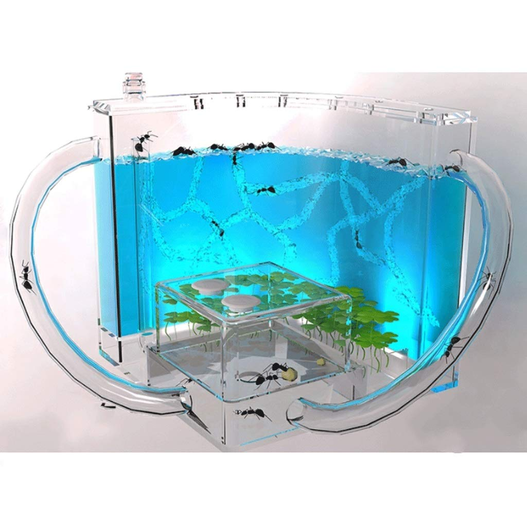 GLOOPE Ant Farm Castle, Habitat Educational Learning Science Kit Toy for Kids & Adults Ecosystem Within The 3D Maze of Translucent Gel Living Ants are Not Included