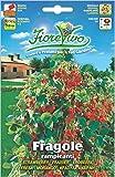 Hortus 60SDFF014 Fiorevivo Fragole Rampicanti