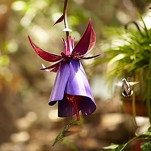 Fuchsia Hummingbird Feeder, Desert Steel Hummingbird Feeder, All-Weather Outdoor Metal Garden Art Flower Bird Feeder, Flower Shape Hanging Bird Feeder for Garden Patio Garden Decoration (Fuchsia)