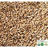 4 oz Sample Pack - ORGANIC Wheatgrass SPROUTING Seeds - MySeeds.Co's Sprouter Choice Seeds (4 oz Organic Wheatgrass)