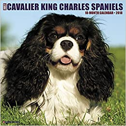 Just cavalier king charles spaniels 2018 calendar willow creek just cavalier king charles spaniels 2018 calendar willow creek press 0709786040469 amazon books altavistaventures Images