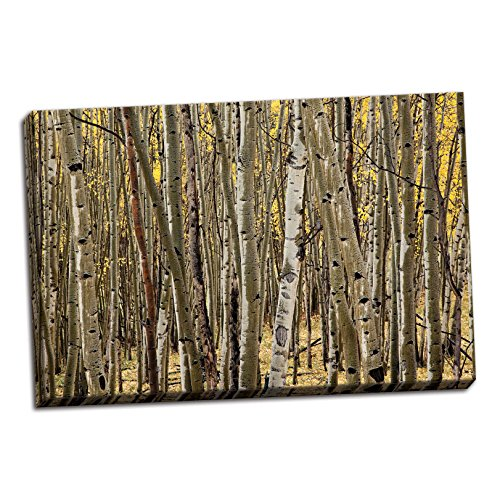 Gango Home Décor Aspen Grove I, Fine Art Photograph by: Larry Malvin; One 36x24in Hand-Stretched Canvas (Aspen Grove Art Fine)