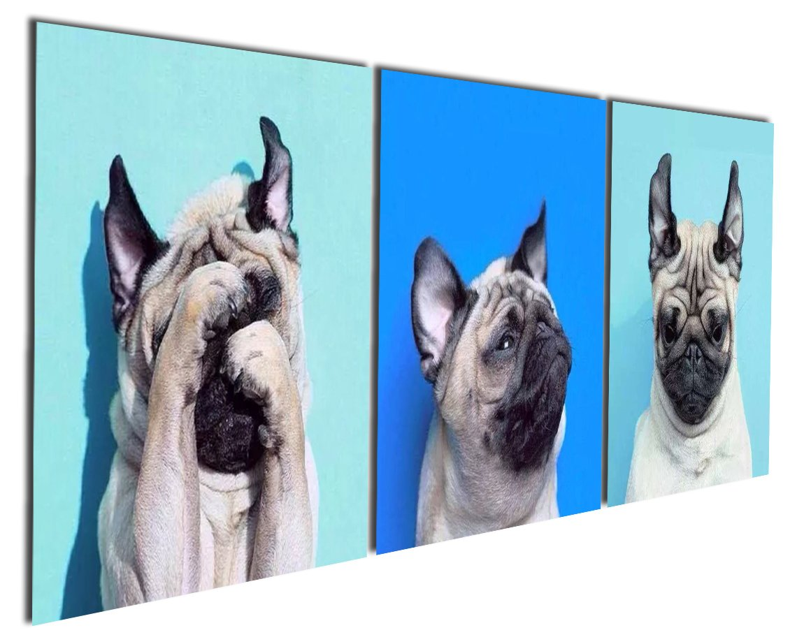 Gardenia Art - Animal World Series 13 Pug Puppy Modern Canvas Wall Art Paintings Puppy Blue Artwork for Bedroom Living Room Decoration,12x12 inch per piece, 3 pieces per set, Stretched and Framed