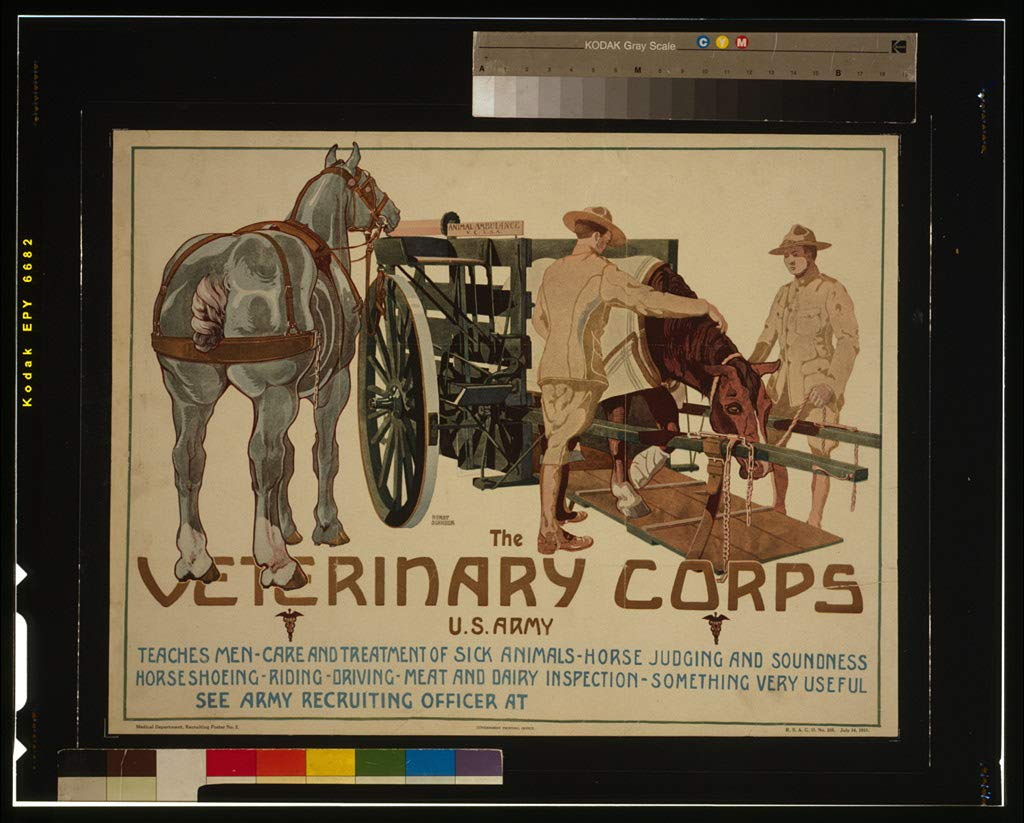 16 x 24 WWI Image of The Veterinary Corps, U.S. Army, teaches men care and treatment of sick animals; horse judging and soundness; horseshoeing; riding; driving; meat and dairy inspecti 1919 0 18a