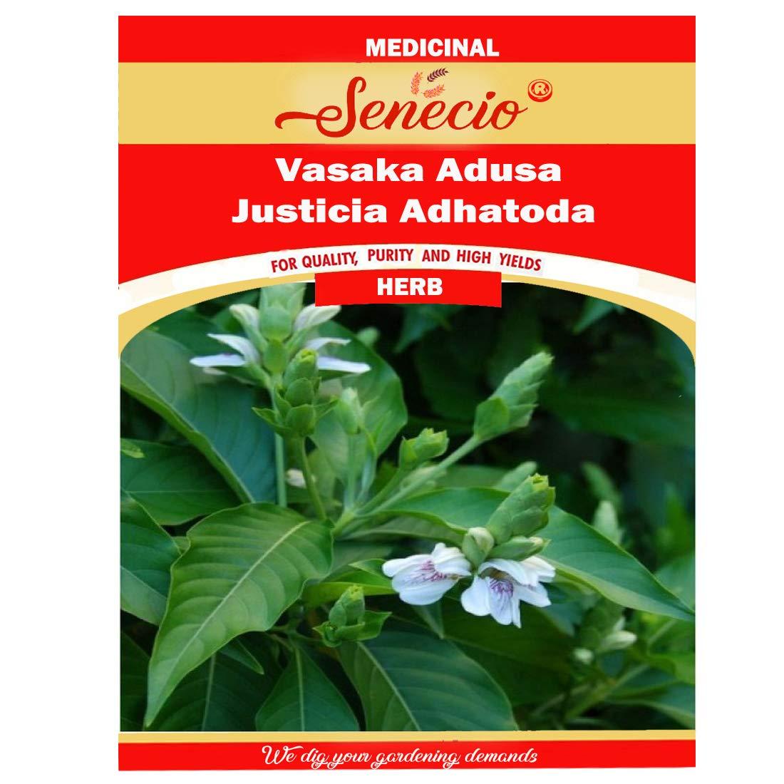 SENECIO® Vasaka, Adusa, Justicia Adhatoda, Ardusi-Malabar Nut
