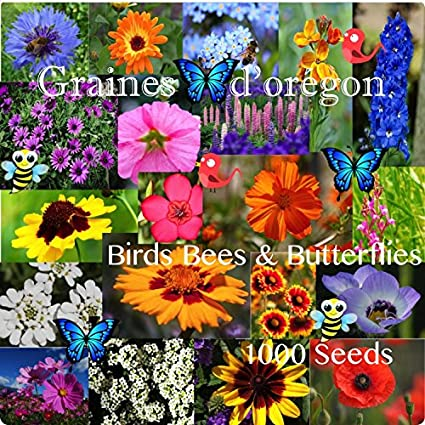 Amazon bees birds and butterflies flower seed mix 1000 seeds bees birds and butterflies flower seed mix 1000 seeds annual perennial flowers grown harvested mightylinksfo