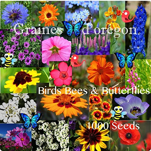 Bees Birds and Butterflies Flower Seed Mix 1000 Seeds Annual & Perennial Flowers Grown & Harvested in ()