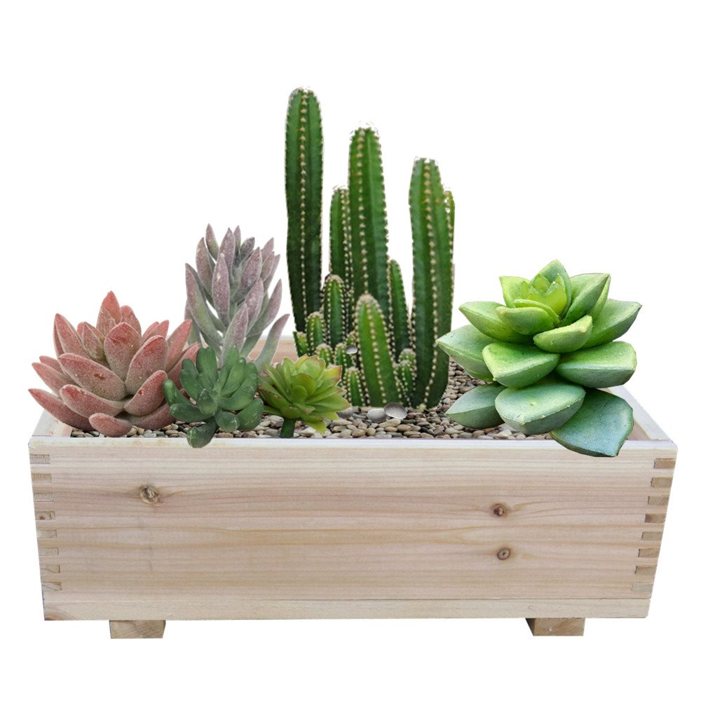 Timber Valley 10'' x 16'' Dual Purpose Cedar Garden Planter Box & Storage Box (Set of 2)