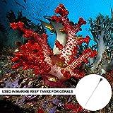PeSandy Coral Feeder SPS HPS Feeder, Long Acrylic
