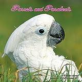 Exotic Bird Calendar - 2017 Wall Calendars - Calendar 2016 - Bird Calendar - Monthly Wall Calendar - Parrots and Parakeets Calendar by Magnum