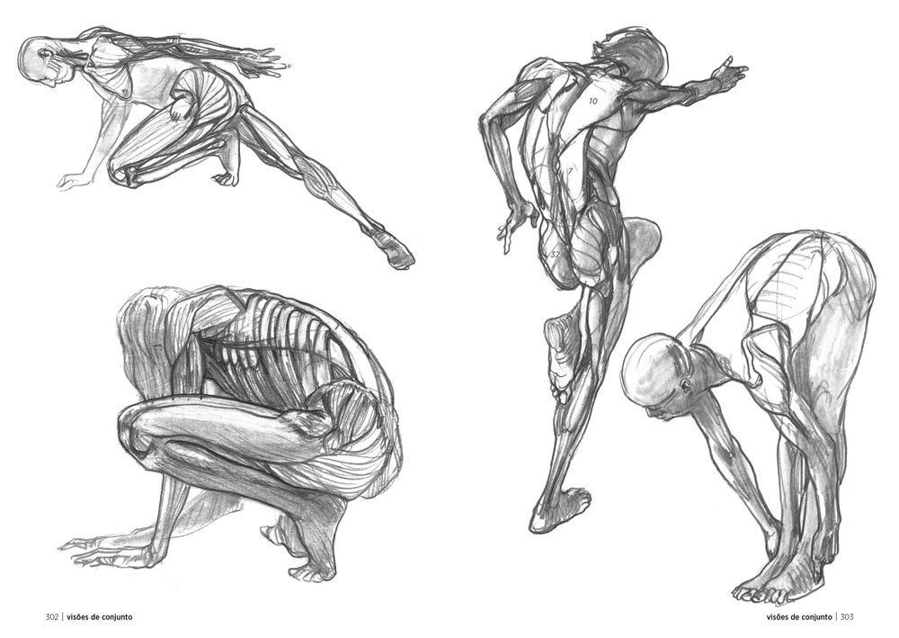Anatomia artística: Amazon.es: Michel Lauricella: Libros