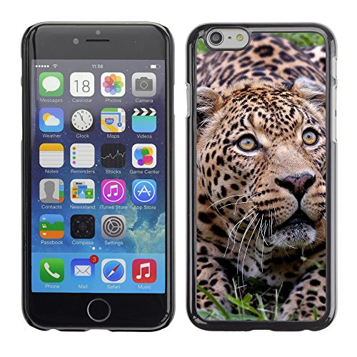 Premio Sottile Slim Cassa Custodia Case Cover Shell // V00003476 jaguar animale // Apple iPhone 6 6S 6G PLUS 5.5""