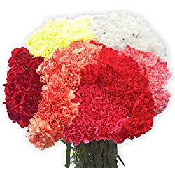 200 Fresh Cut Assorted Color Carnations for Valentine's Day | Fresh Flowers Express Delivery | Perfect Gift for Valentine's Day.
