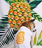 A Pineapple A Day Dog Shirt