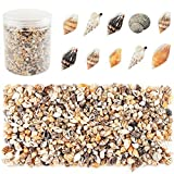 Weoxpr 2000 Pcs Tiny Sea Shells Mixed Ocean Beach