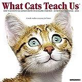 What Cats Teach Us 2018 Wall Calendar
