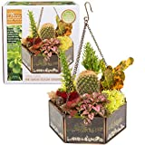 D'Eco Hanging Glass Terrarium, Succulent & Air Plant Greenhouse (Hexagon)
