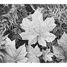 """Leaves, Glacier National Park, Montana - National Parks and Monuments, 1941 by Ansel Adams - 28"""" x 32"""" Giclee Canvas Art Print"""