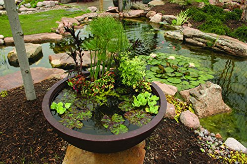 Aquascape Aquatic Patio Pond, Container Water Garden, 24-Inch Round, Green Slate | 98853