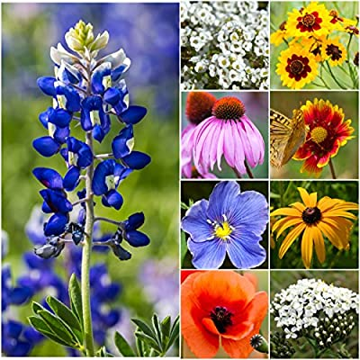 Bulk Package of 30,000 Seeds, Texas / Oklahoma Wildflower Mixture (100% Pure Live Seed) Non-GMO Seeds by Seed Needs ...