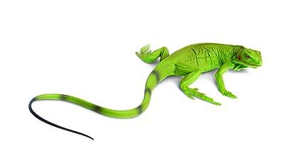 Buy Safari Ltd Iguana Baby Online at Low Prices in India