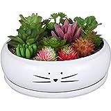 Koolkatkoo 8 Inch Large Cute Cat Ceramic Succulent Planter Pots with Removable Saucer Unique Porcelain Cactus Planters…