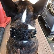Amazon.com: Dogs Kingdom Collar de cuero negro de perro ...